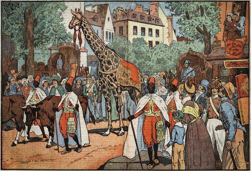 Quest'incisione del XX secolo raffigura l'ingresso della giraffa a Parigi nel 1827